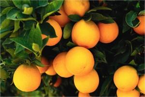 Come naranjas para tener una piel saludable
