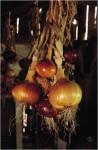 El poder de las especias: Cebolla